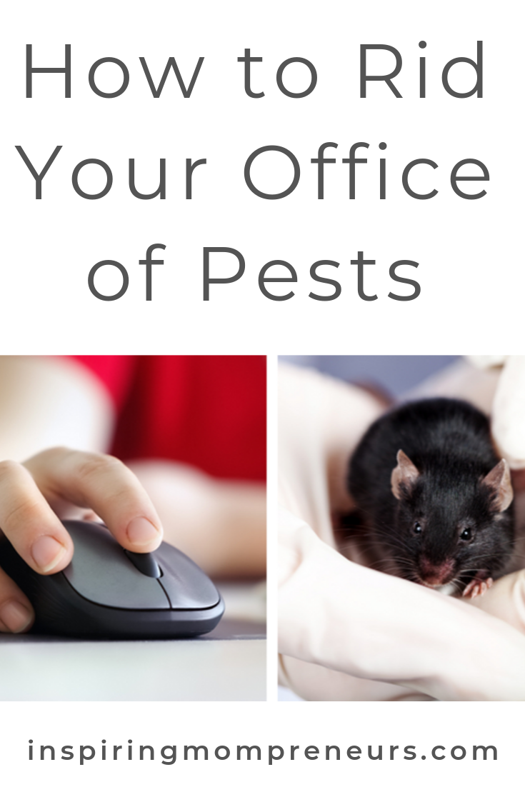 Which mouse would you rather have in your office? Here's why those pests need to go and how you can get rid of them. #howtogetridofofficepests